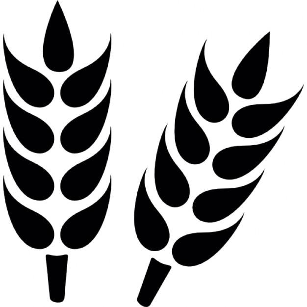 Ziarno pszenicy z bliska Darmowe ikony