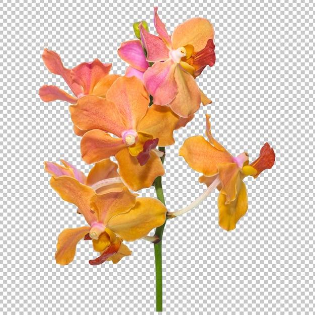 Bukiet Różowo-pomarańczowych Kwiatów Orchidei Na Przezroczystości Na Białym Tle. Premium Psd
