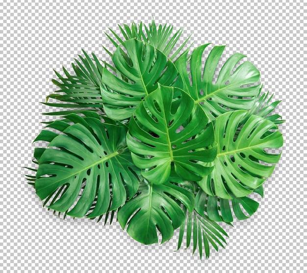 Bush Zielony Liść Monstera Na Białym Tle Premium Psd