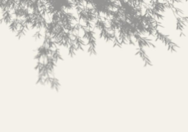Cień Drzewa Na Białej ścianie. Premium Psd