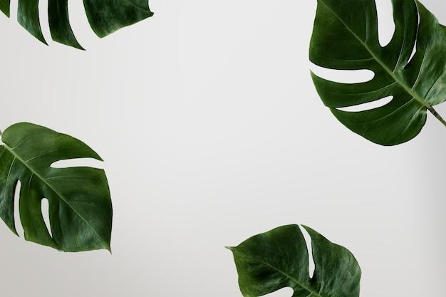 Cień Liści Palmowych Na ścianie Darmowe Psd