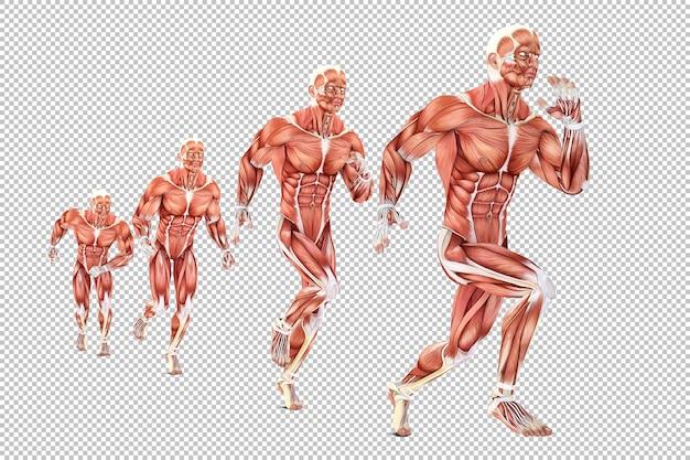 Ilustracja Anatomii Uciekinierów Premium Psd