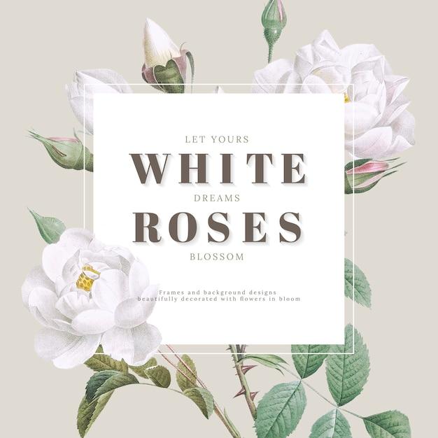 Inspirujące wzornictwo białych róż Premium Psd
