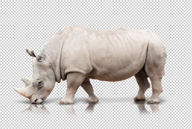 Realistyczne Nosorożca Premium Psd