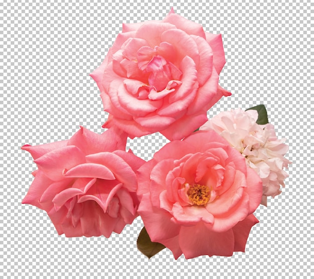Różowe Kwiaty Róży Na Przezroczystym Premium Psd