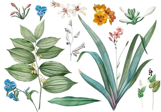 Zestaw kwiatów i ilustracji roślin Darmowe Psd