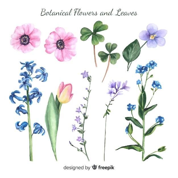 Akwarela botaniczne kwiaty i liście Darmowych Wektorów
