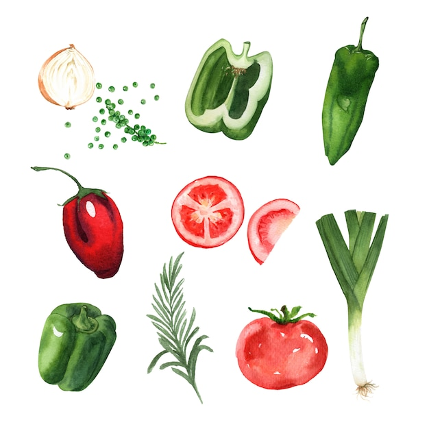 Akwarela element projektu warzyw Darmowych Wektorów
