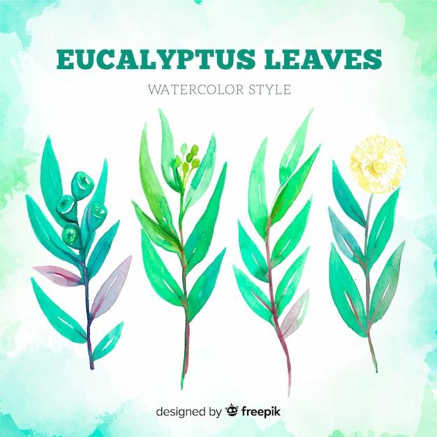 Akwarela Eukaliptus Pozostawia Tło Darmowych Wektorów