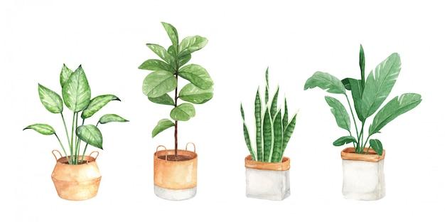 Akwarela Ilustracja Roślin Miejskich, Ręcznie Malowana Premium Wektorów