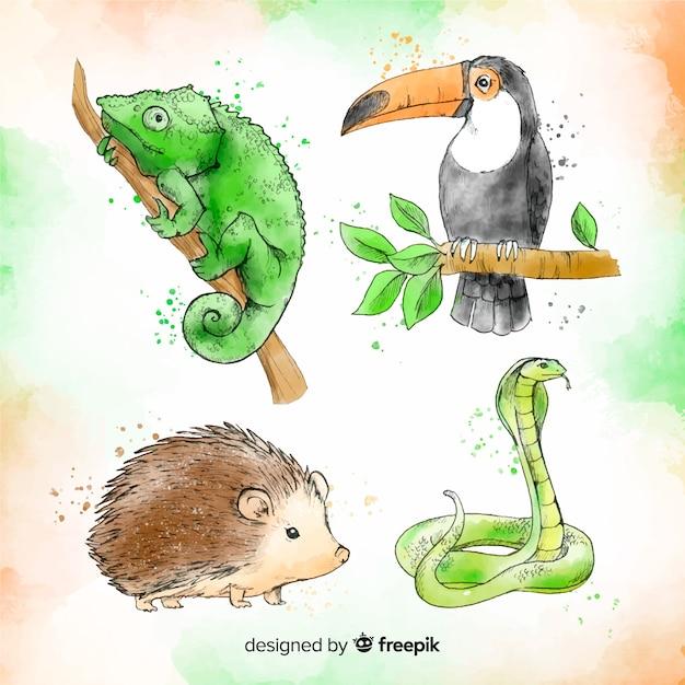 Akwarela kolekcja zwierząt tropikalnych Darmowych Wektorów