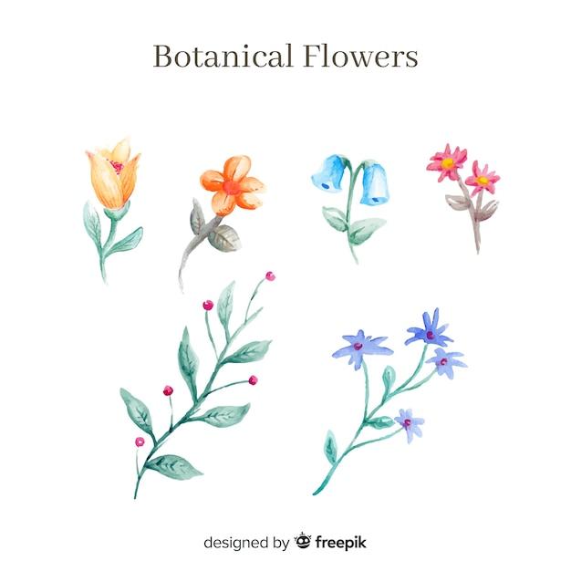 Akwarela kolekcji kwiat botaniczny Darmowych Wektorów
