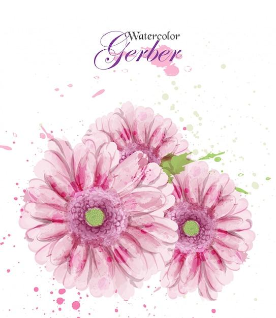 Akwarela Kwiat Gerber Premium Wektorów