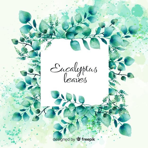 Akwarela liści eukaliptusa Darmowych Wektorów
