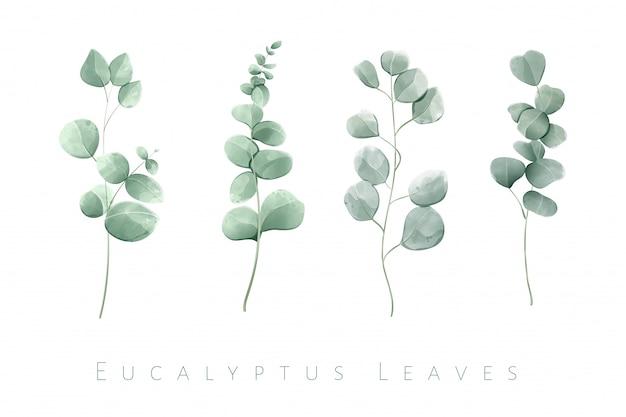 Akwarela Na Białym Tle Liści Eukaliptusa W Zestawie 4 Gałęzi. Premium Wektorów