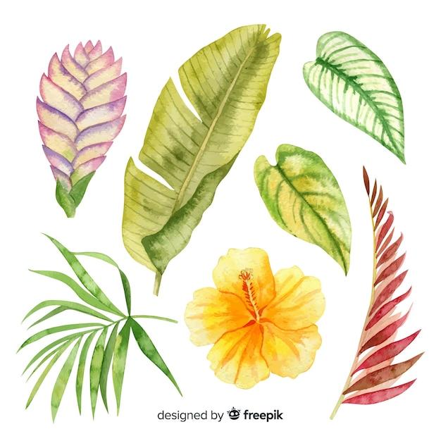 Akwarela tropikalnych kwiatów i liści Darmowych Wektorów