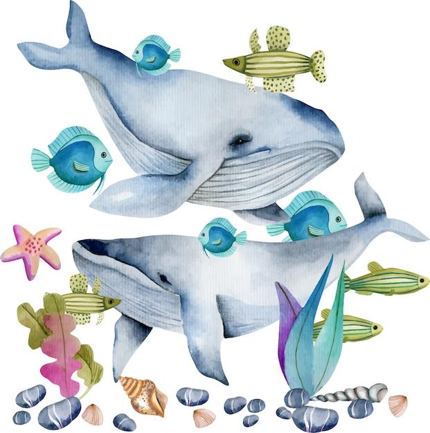 Akwarela Wieloryby Wśród Oceanicznych Ryb Ilustracyjnych Premium Wektorów