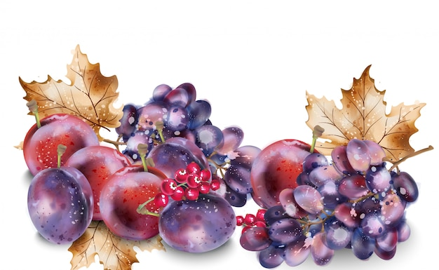 Akwarela winogron i śliwek. jesieni jesień zbiory tło Premium Wektorów