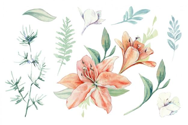 Akwarela zestaw lilii, pąków i liści. Premium Wektorów