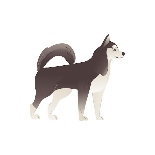 Alaskan Malamute Lub Siberian Husky, Uroczy Pies Z Rodowodem Północy. Zwierzę Domowe Lub Postać Szczeniaka. Premium Wektorów
