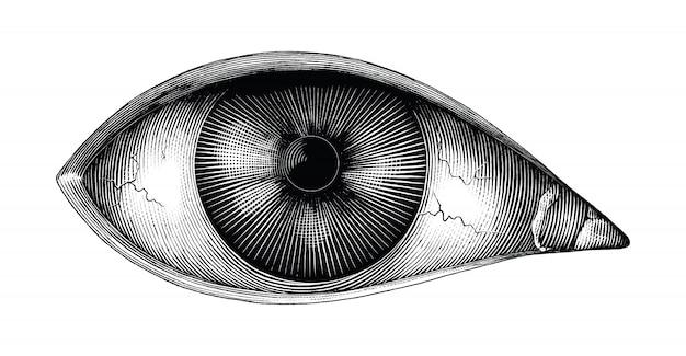 Anatomia Ludzkiego Oka Ręka Rysować Vintage Clipart Na Białym Tle Premium Wektorów