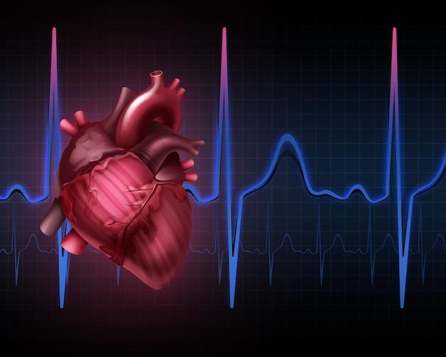 Anatomia Ludzkiego Serca Z Kardiogramem. Na Białym Tle Premium Wektorów