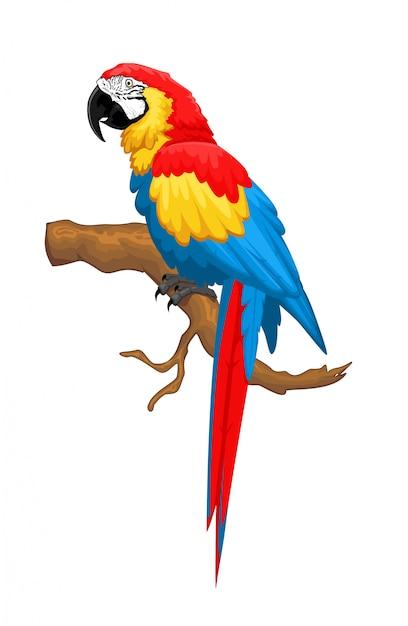 Ara Ptak Premium Wektorów