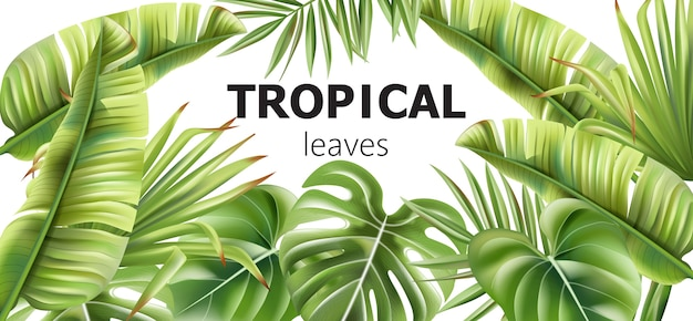 Baner Zielonych Liści Tropikalnych Z Miejscem Na Tekst Darmowych Wektorów