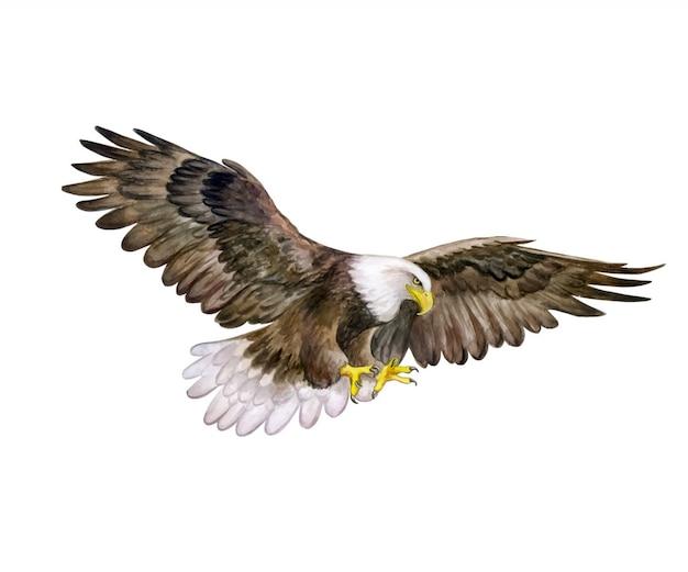 Biała Głowa Orzeł. Akwarela. Bald Eagle Bird. Premium Wektorów