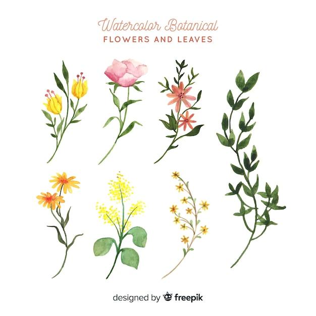 Botaniczne Kwiaty I Liście Darmowych Wektorów
