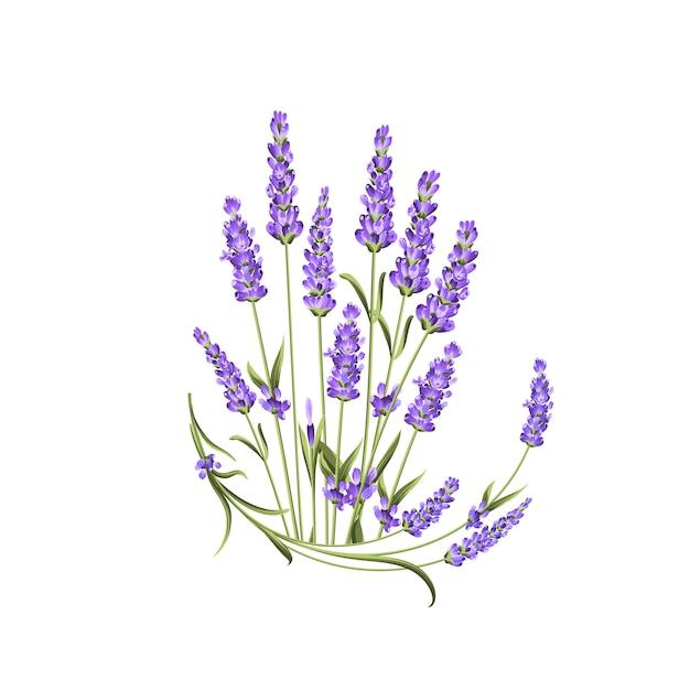 Bukiet Kwiatów Lawendy Na Białym Tle Premium Wektorów