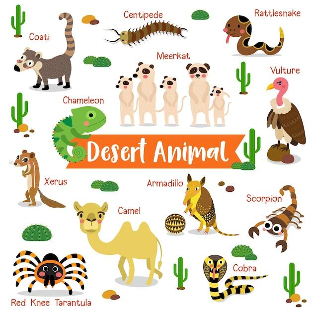 Cartoon zwierząt pustyni z nazw zwierząt Premium Wektorów