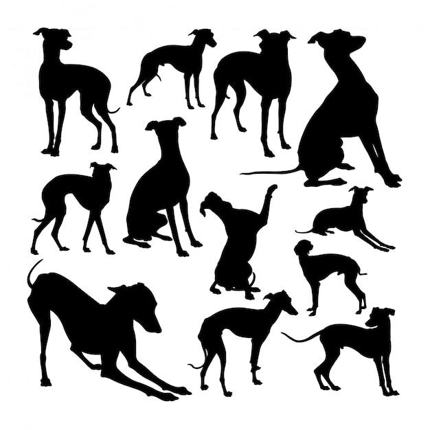 Charcik Włoski Pies Sylwetki Zwierząt. Premium Wektorów