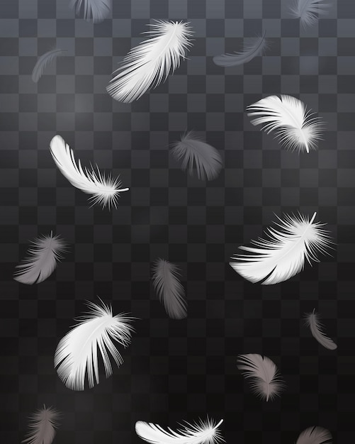 Czarno-białe Pióra Ptaków Realistyczne Przezroczysty Zestaw Na Białym Tle Darmowych Wektorów