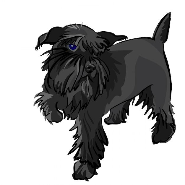 Czarny Pies Rasy Sznaucer Miniaturowy Premium Wektorów