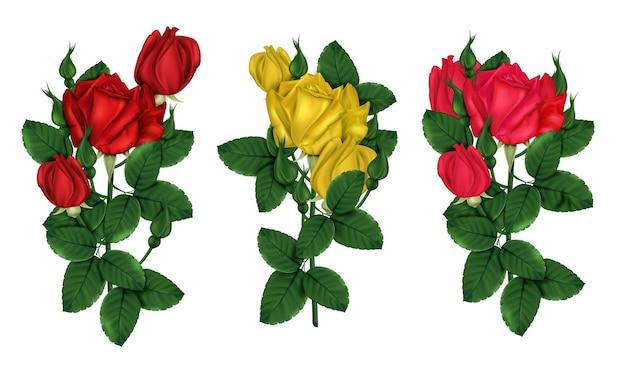 Czerwone I żółte Róże Z Zielonymi Liśćmi Premium Wektorów