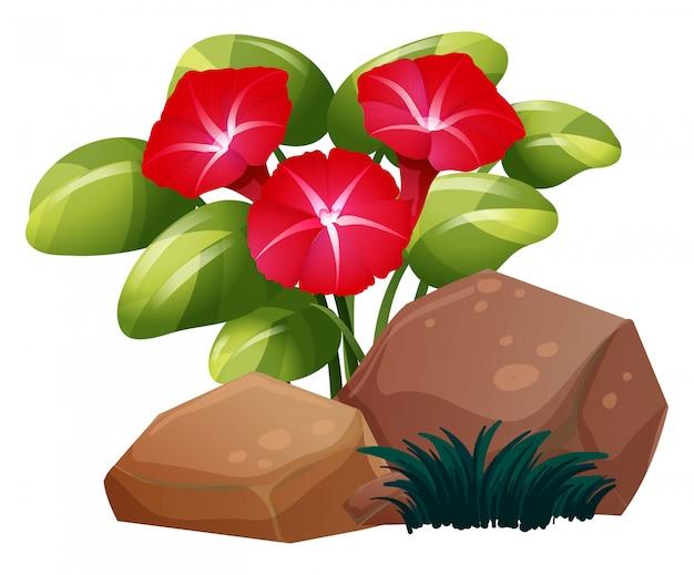 Czerwone kwiaty chwały rano Darmowych Wektorów