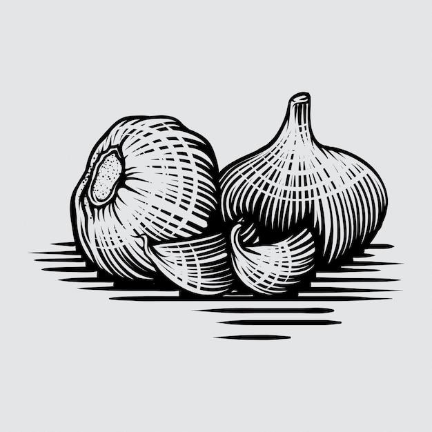 Czosnek w stylu grafiki rysowane ręcznie ilustracji Premium Wektorów