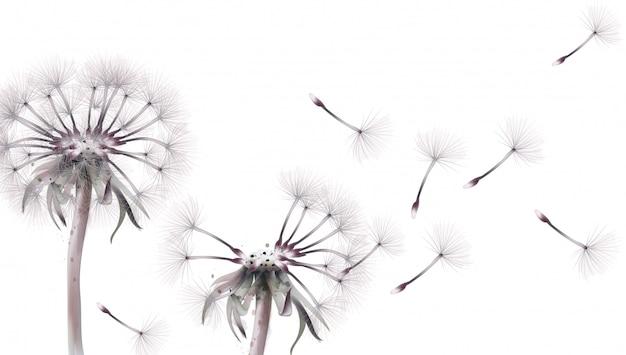 Dandelion w akwareli Premium Wektorów