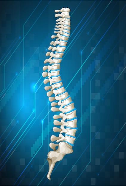 Diagram ludzkiego kręgosłupa na niebiesko Premium Wektorów