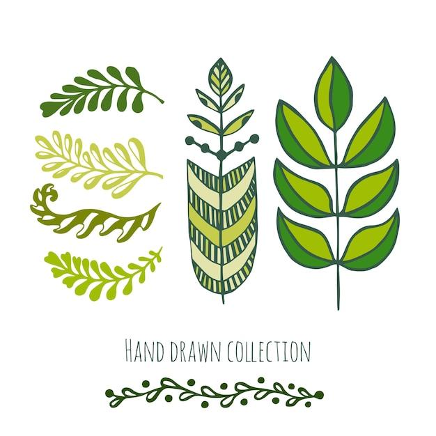 Doodle Etniczne Zielone Liście Na Wiosnę Lub Lato Dekoracji, Zaproszenia I Karty Z Pozdrowieniami Premium Wektorów