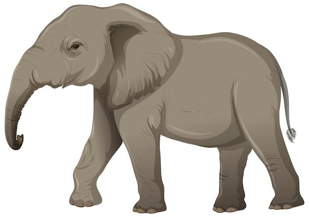 Dorosły Słoń Bez Kości Słoniowej W Stylu Cartoon Na Białym Tle Darmowych Wektorów