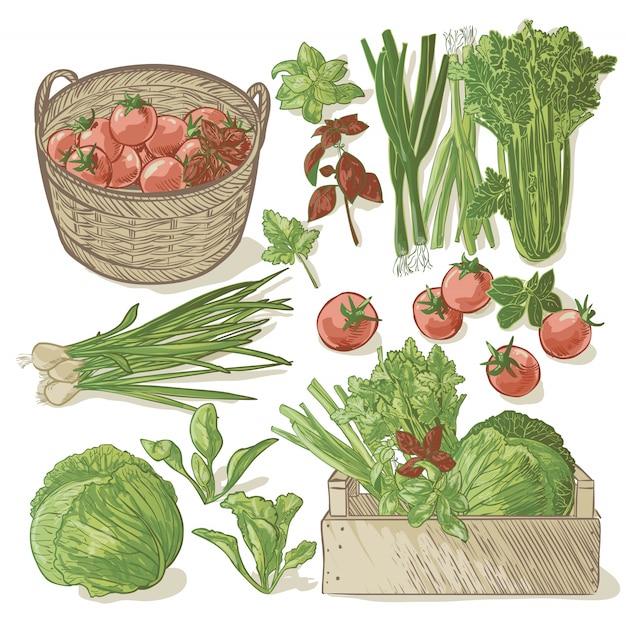 Drewniana skrzynia pełna świeżych warzyw i ziół Premium Wektorów