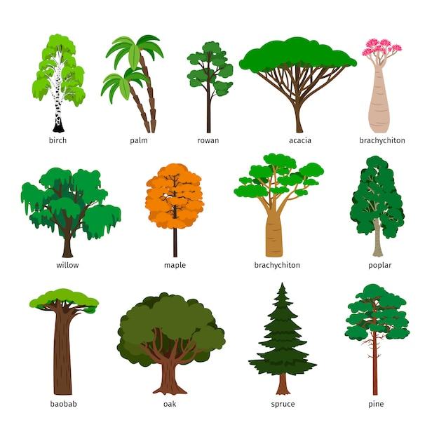 Drzewa Wektorowe Premium Wektorów