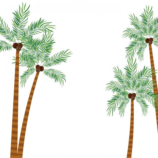 Drzewko palmowe z koksem w białym tle Premium Wektorów