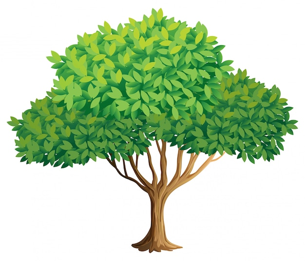 Drzewo Darmowych Wektorów