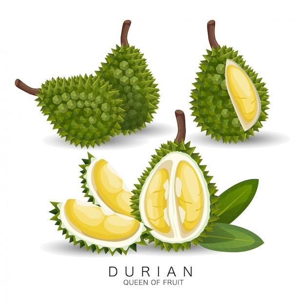 Durian to bardzo smaczne owoce Premium Wektorów