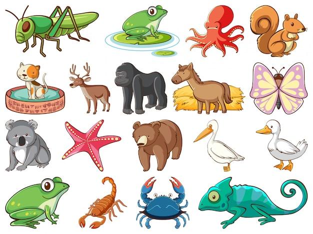 Duży Zestaw Dzikiej Przyrody Z Wieloma Rodzajami Zwierząt Darmowych Wektorów