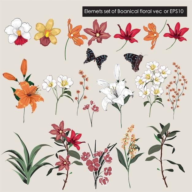 Duży Zestaw Ogrodowych Elementów Kwiatowych - Kolekcja Dzikich Kwiatów, łąk I Liści Premium Wektorów
