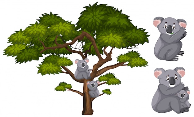 Duży Zielony Drzewo I Koale Na Gałąź Premium Wektorów